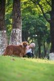 使用在草的女孩和金毛猎犬 免版税图库摄影