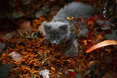 使用在草的小的小猫 免版税库存图片