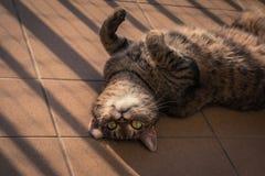 使用在阳台的猫 免版税图库摄影
