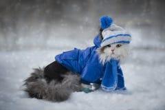 使用在雪冷淡的天的猫 免版税库存图片
