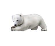 使用在雪的一个北极熊婴孩的画象 免版税库存照片