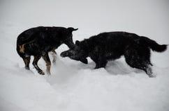 使用在雪的两条杂种狗 库存照片