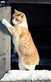 使用在雪的猫 免版税库存图片