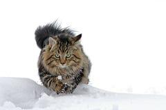 使用在雪给予乐趣 库存照片