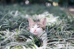 使用在领域附近的一只白色和灰色头发小猫 免版税库存图片