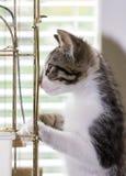 使用在鸟笼的一只美丽的平纹小猫 库存照片