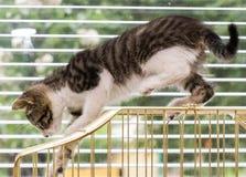 使用在鸟笼的一只美丽的平纹小猫 免版税库存图片