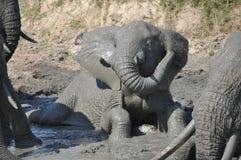 使用在水中的大象 库存照片