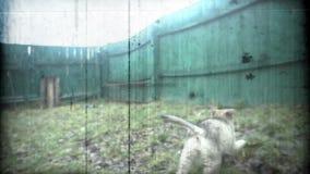 使用在围场的小狗 减速火箭的照相机样式 股票视频