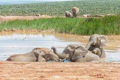 使用在waterhole的三头大象 库存照片