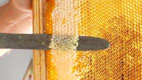 使用堵塞的刀子的手蜂窝用蜂蜜 股票录像