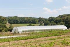 使用塑料隧道的耕种在农场 库存照片