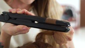使用头发钳子的发式专家为卷曲的子线 关闭卷曲有头发铁的长的头发在秀丽演播室 美发师 股票录像