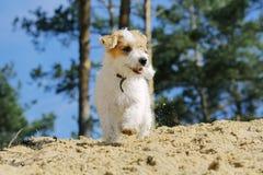 使用小滑稽的微笑的小狗户外 库存照片
