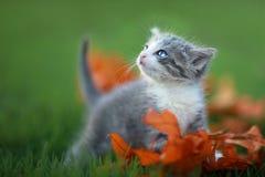 使用户外在草的小小猫 免版税库存图片