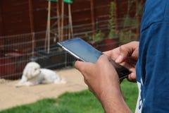 使用手机的偶然人` s手有狗的在背景中 免版税库存图片