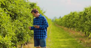 使用数字式片剂的农夫,当检查植物时在果树园离开 影视素材