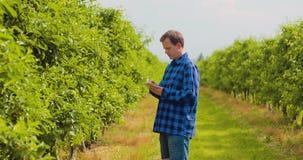 使用数字式片剂的农夫,当检查植物时在果树园离开 股票录像