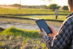 使用数字式片剂计算机的农夫在培养的农业F 库存照片