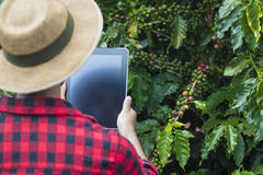 使用数字式片剂计算机的农夫在耕种的咖啡领域种植园 库存图片