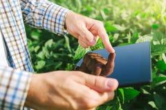 使用数字式片剂计算机的农夫在耕种的大豆播种 免版税库存图片