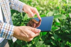 使用数字式片剂计算机的农夫在耕种的大豆播种 免版税库存照片