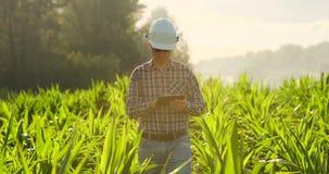 使用数字片剂计算机,耕种的玉米种植园的农夫在背景中 现代技术应用 股票视频