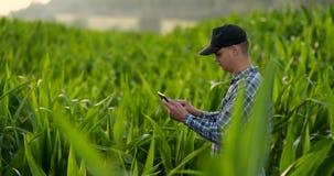 使用数字片剂计算机,耕种的玉米种植园的农夫在背景中 现代技术应用 影视素材