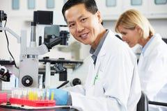 使用显微镜的男性和女性科学家在实验室 免版税库存图片
