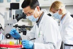 使用显微镜的男性和女性科学家在实验室 免版税库存照片