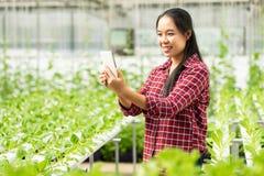 使用智能手机的亚裔妇女农夫在水耕的农场 免版税库存照片