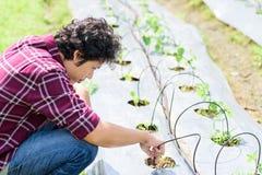 使用水滴灌溉系统的亚裔年轻农夫 免版税库存图片