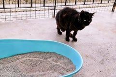 使用洗手间的在垃圾箱的猫,猫,为了pooping或者小便, pooping在干净的沙子洗手间 免版税库存照片