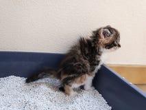 使用洗手间,垃圾箱的一只小小猫, 图库摄影