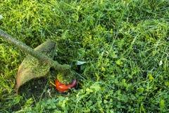 使用灌木清除机刈草机或电动工具串草坪整理者的割的绿色野草领域 割与整理者的一棵草 免版税库存图片