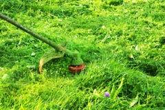 使用灌木清除机刈草机或电动工具串草坪整理者的割的绿色野草领域 割与整理者的一棵草 免版税图库摄影
