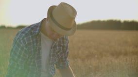 使用片剂的农夫在麦田 工作在与农业技术的领域的科学家 关闭人手 影视素材