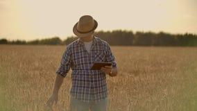 使用片剂的农夫在麦田 工作在与农业技术的领域的科学家 关闭人手 股票视频
