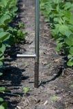 使用片剂的农艺师在一个农业领域 图库摄影