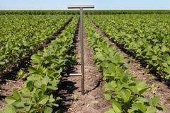 使用片剂的农艺师在一个农业领域 免版税库存图片