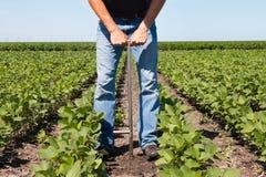 使用片剂的农艺师在一个农业领域 免版税库存照片