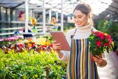 使用片剂的美丽的妇女花匠和拿着植物在罐 免版税库存图片