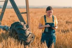 使用片剂的麦场场主在谷物庄稼领域 库存图片