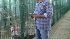 使用片剂计算机的农夫人,检查质量在禽畜养鸡场,火鸡农场,种田,禽畜生产 影视素材