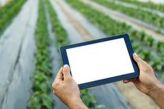 使用片剂计算机的农夫在温室 空白屏幕 免版税库存图片