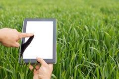 使用片剂计算机的农夫在绿色麦田 空白屏幕 免版税库存照片