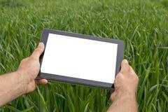 使用片剂计算机的农夫在绿色麦田 空白屏幕 免版税库存图片