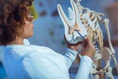 使用牙模型的医生妇女教的解剖学 免版税库存图片