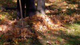 使用犁耙,工作者收集黄色下落的叶子在秋天公园 股票录像