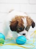 使用用鸡蛋的小狗 免版税库存图片